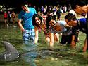 海豚岛之沙滩探险